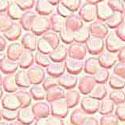 Warm Pink-MEP17